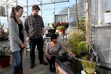 students working in a greenhouse